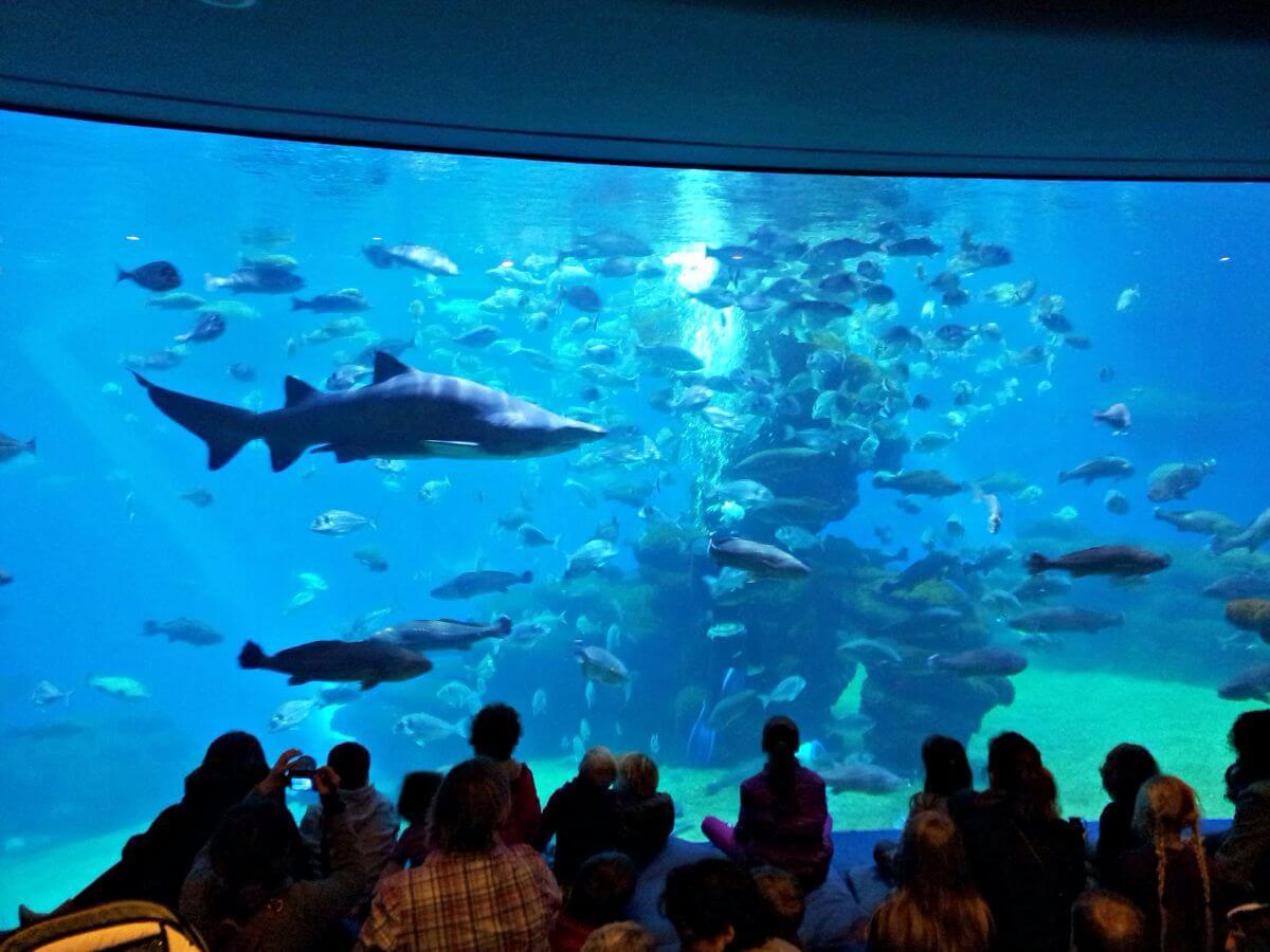 Tiburones en Palma Aquarium