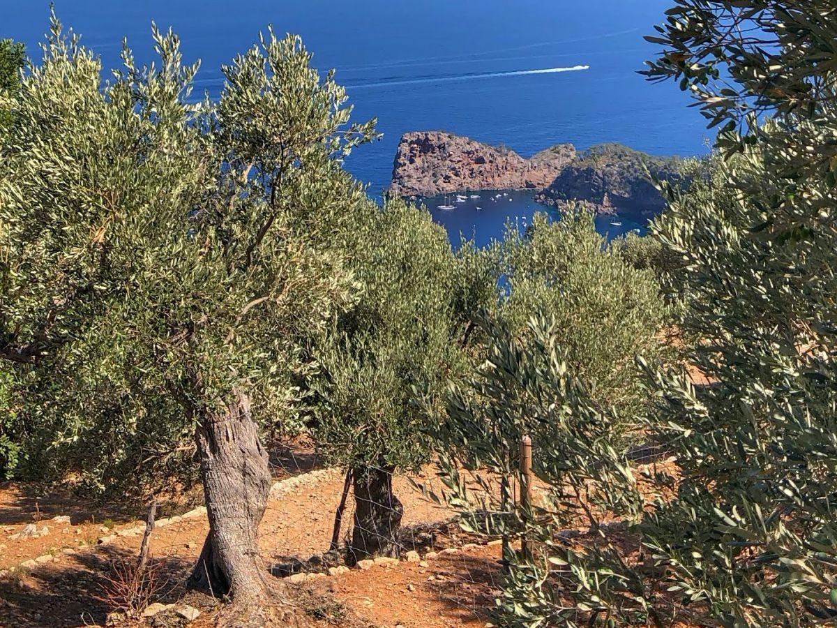 Driveando: otra forma de conocer los secretos de Mallorca