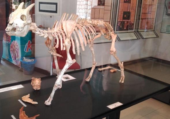 Museo Balear de Ciencias Naturales
