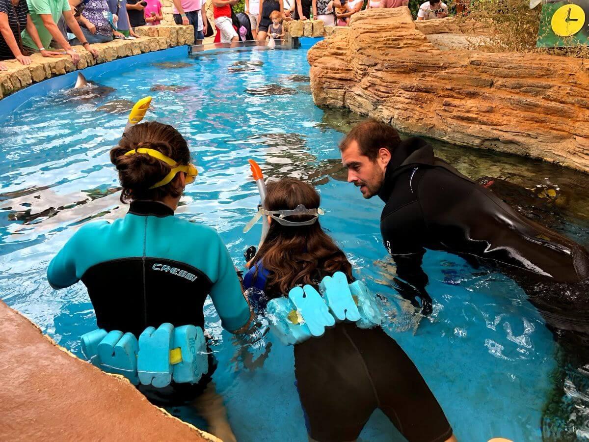 Buceo con rayas en Palma Aquarium