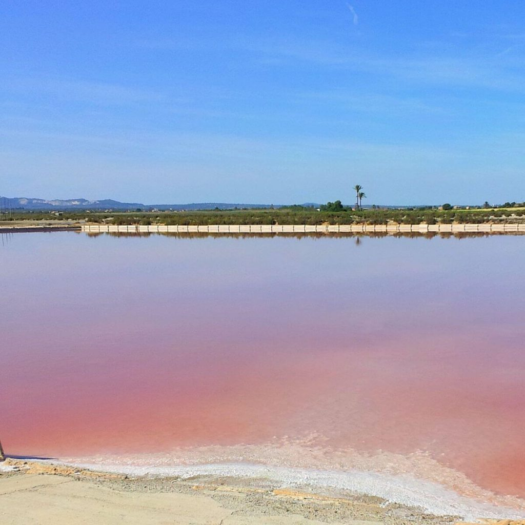 Agua rosa en Ses Salines des Trenc