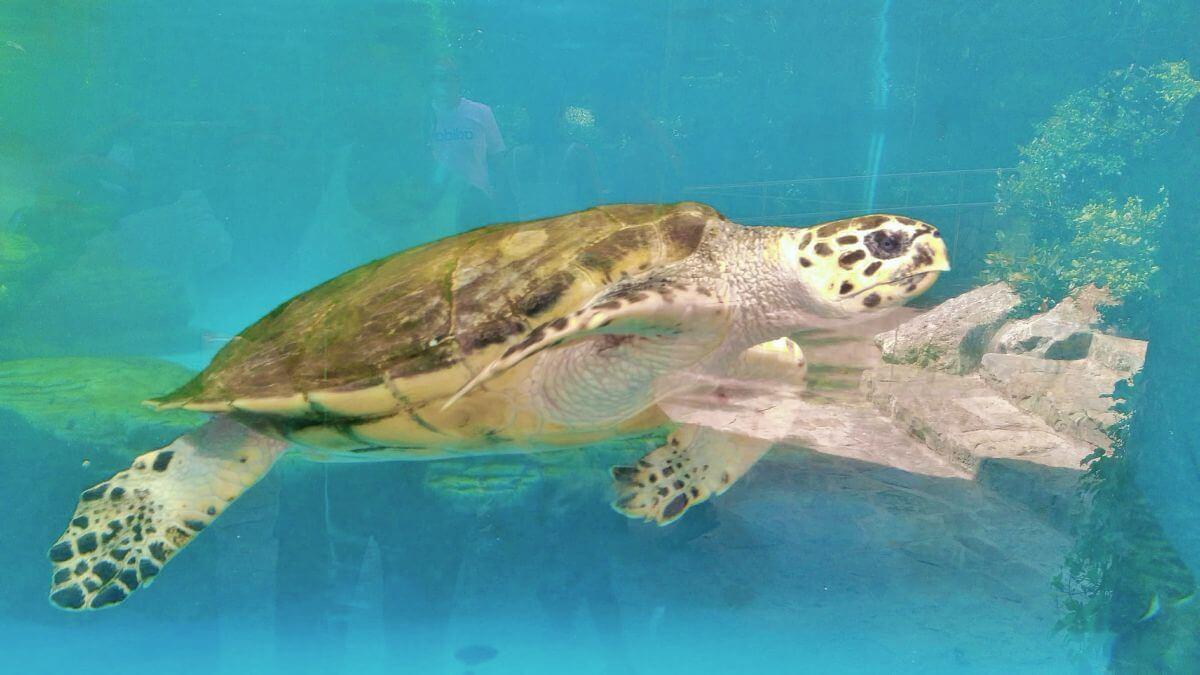 Tortuga marina de Palma Aquarium