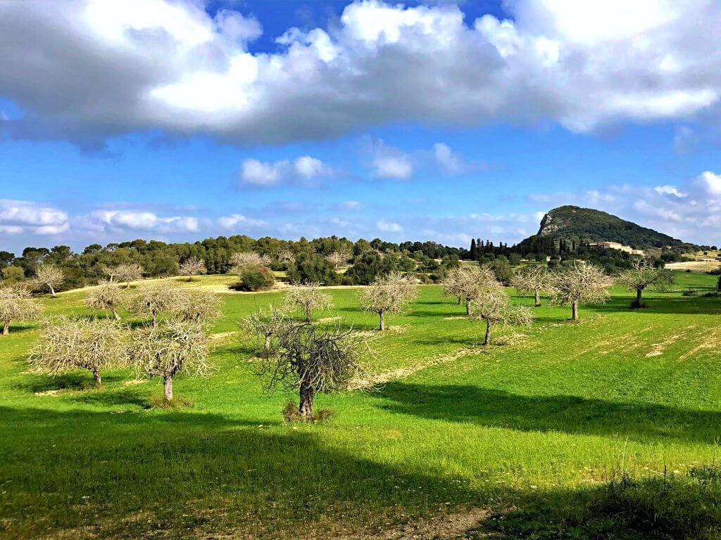 Campo de higueras en Puig de Sant Nofre